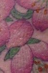 Cherry blossam